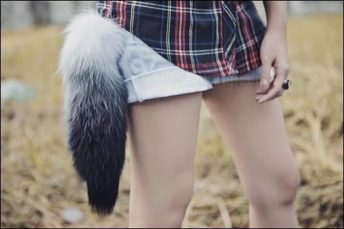 Fox Tail Feathers Tricia Will Go Places